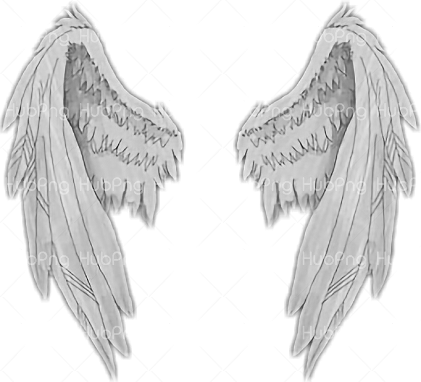 Download Angel Wings Png Alas De Angel Png Hd Clipart Transparent Background Image For Free Download Hubpng Free Png Photos Find & download free graphic resources for angel. download angel wings png alas de angel